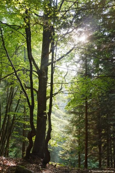 alberi valpore