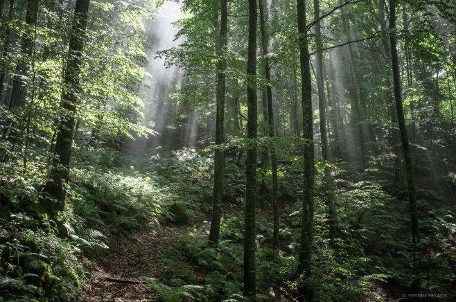 21 marzo - Giornata Internazionale delle foreste