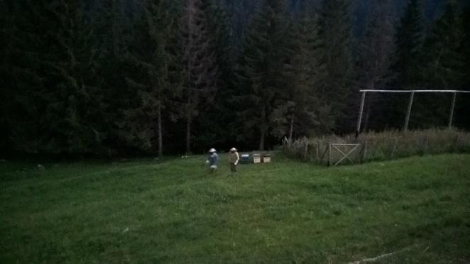 Posizionamento delle arnie di sera, col buio