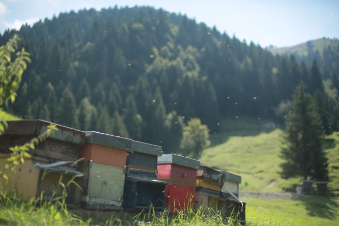 Le arnie con le api al lavoro a Valpore